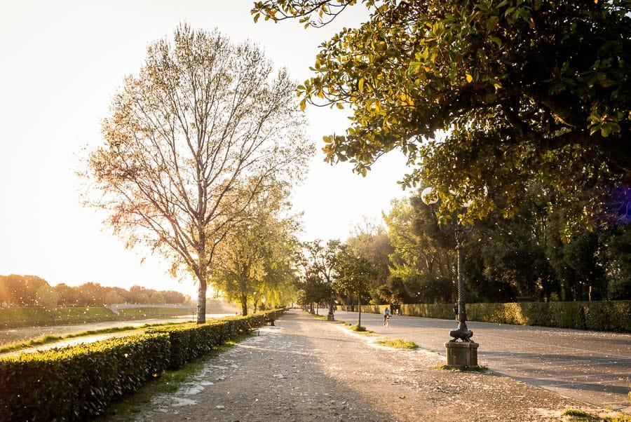 cascine park florence sunset light