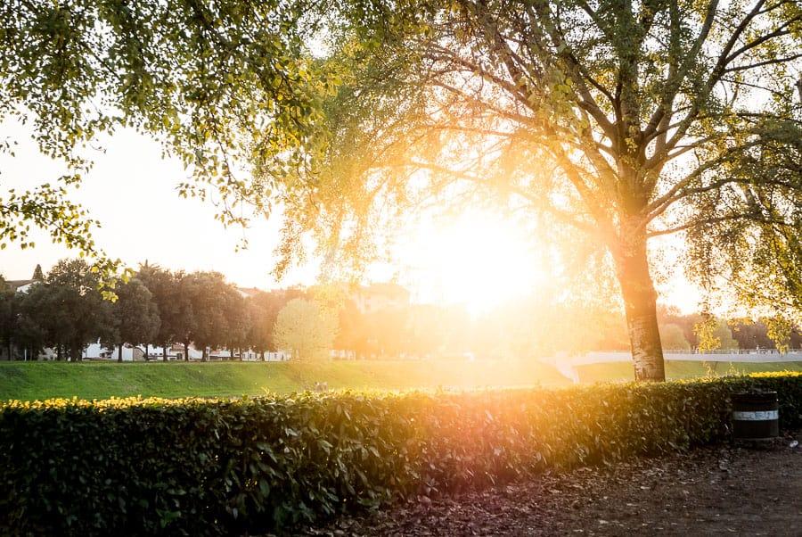 cascine park florence sunset