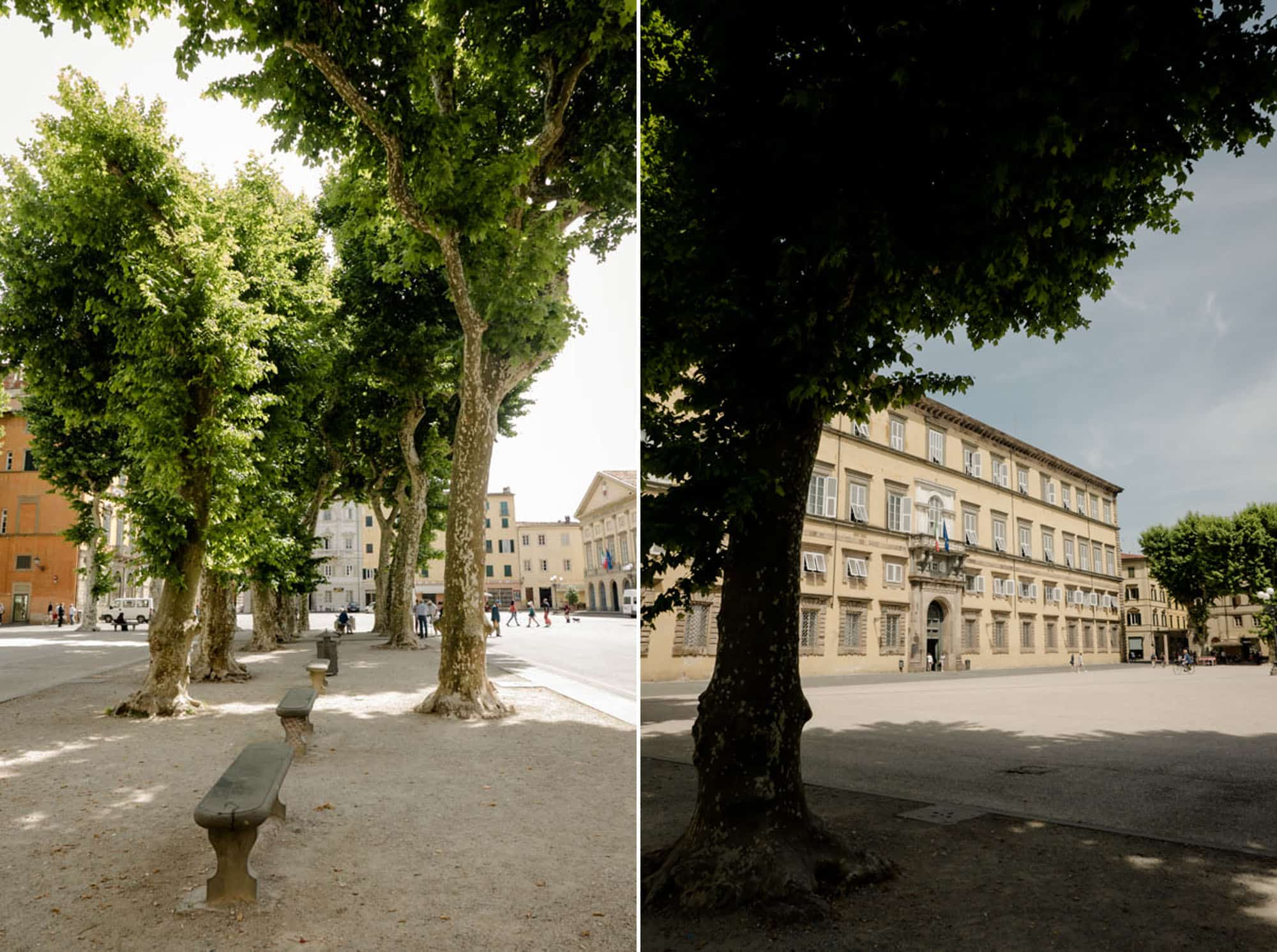 Nice trees in Piazza Napoleone in Lucca
