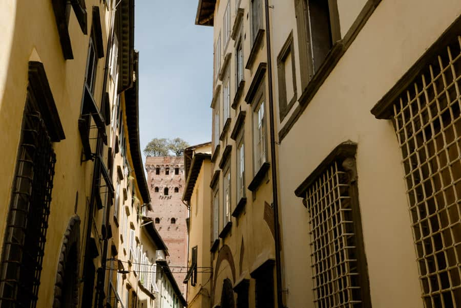 Guinigi Tower in Lucca